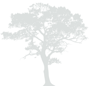 oak-clipart-little-tree-6.png