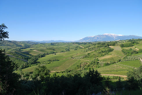 Vineyard_Vigneti_del_Salento.jpeg