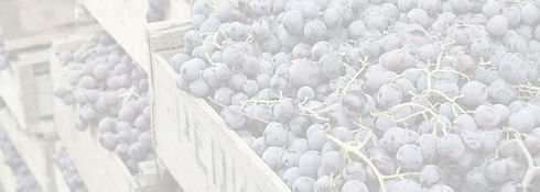 longavi-wines-banner_edited.jpg