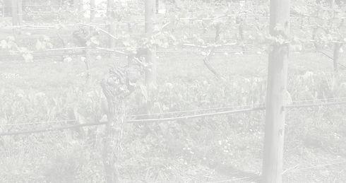 sustainability_WEB_edited.jpg