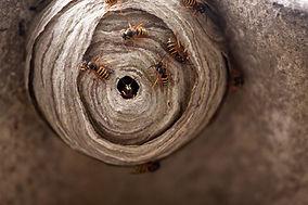 Wasp Control Dorking