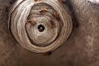 Wasp Control Redhill