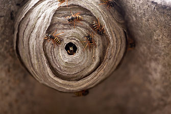 Wasp Control in Reigate