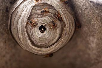 Wasp Control Leatherhead