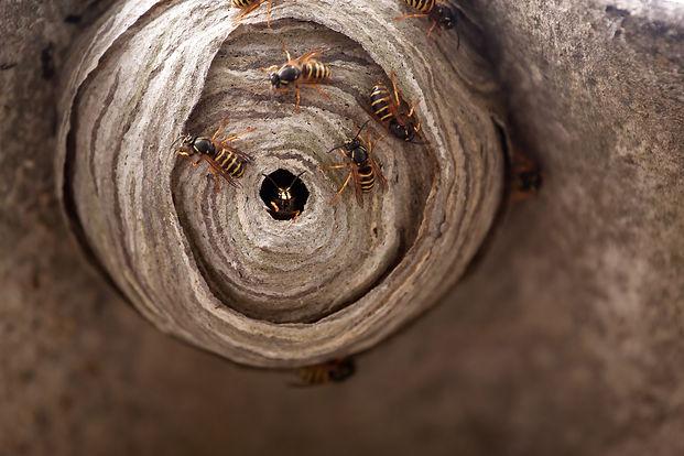 Surrey Hills Wasp Control