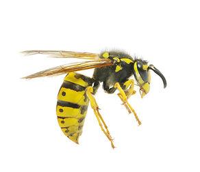 pest control reigate