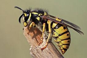 Pest Control Dorking