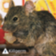 mice reigate