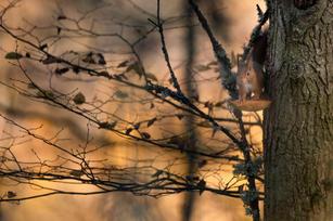 Ecureuil d'automne