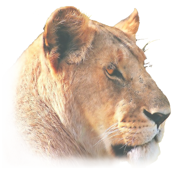 Female Lion 70.png