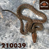 Female Karompa