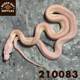 Male SD Ultra Ivory