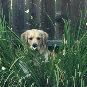 A Blog About a Dog