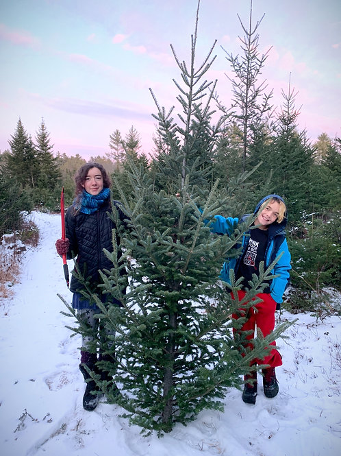Cut Your Own Organic Balsam Fir Tree: Reserve your Tree