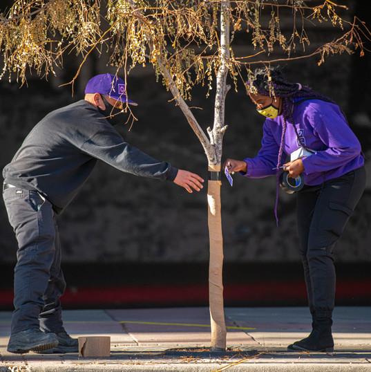 CSG winterizes trees in outdoor public spaces.