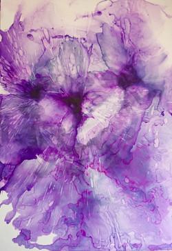Purple Expansión (Expansión Violeta)