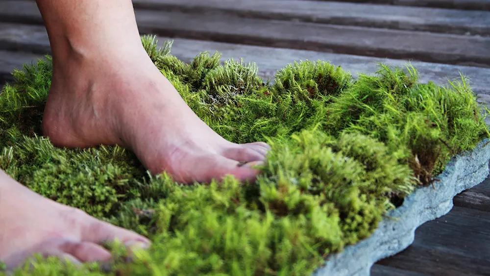 Beauty and Biophilia moss carpet