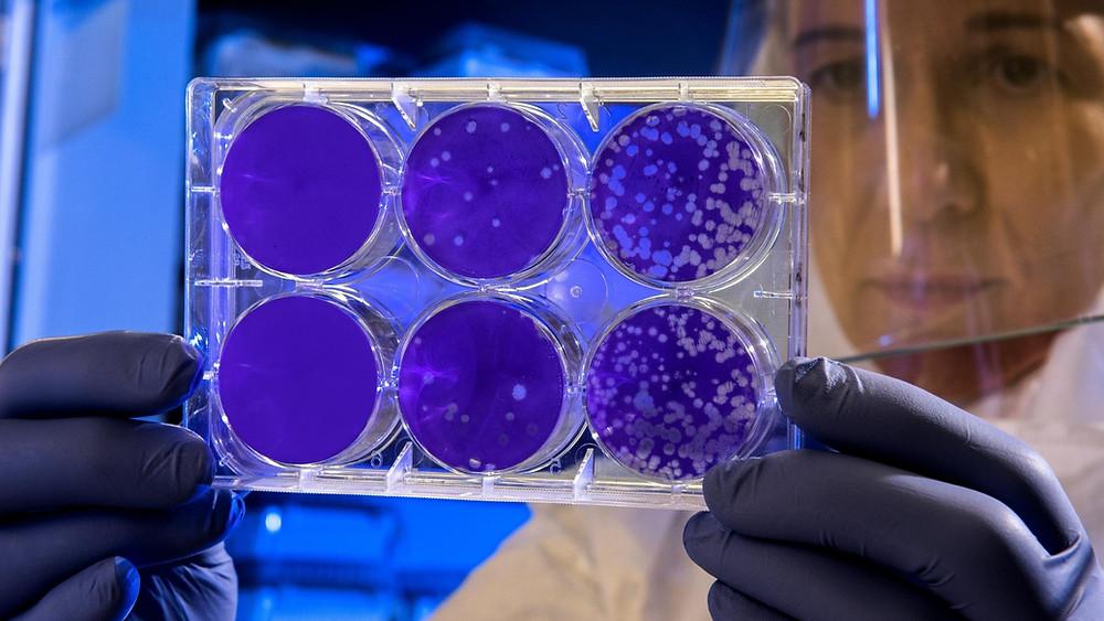 Probiotics protect against superbugs