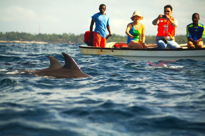 Day 334: Swim with Zanzibar's Wild Dolphins