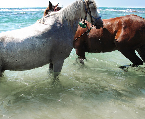 Horses in Michmoret Beach, Israel, late 2000's