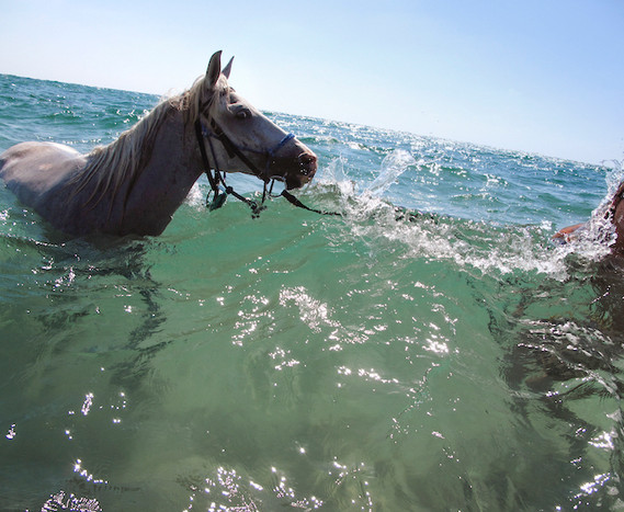 Horse in Michmoret Beach, Israel, late 2000's