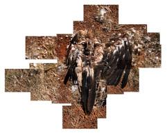 BIRD, KUNUNURRA