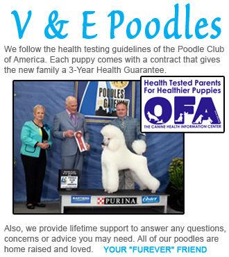 V & E Poodles
