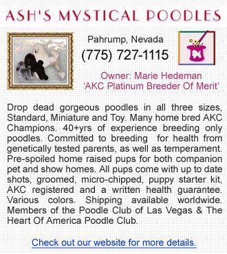 Ash's Mystical Poodles