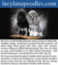 Lacy Lane Poodles