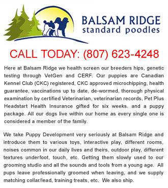 Balsam Ridge Poodles