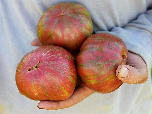 Pink Berkeley Tie-Dye Tomato Plant