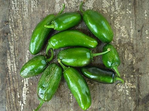 Grande Jalapeno Pepper Plant