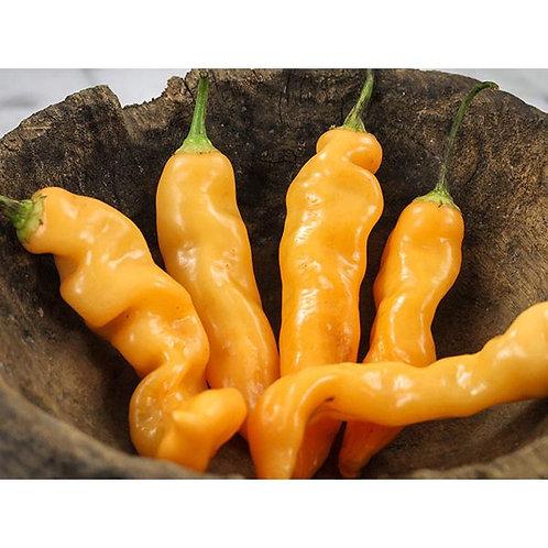Sugar Rush Peach Hot Pepper Plant