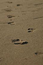 footprints sand.jpg