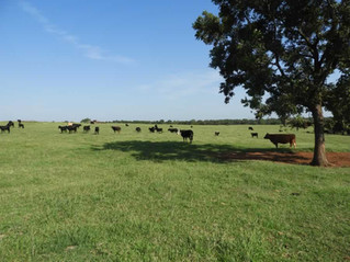 NO RESERVE AUCTION: 80 Acres