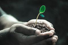 seedling in hand.jpg