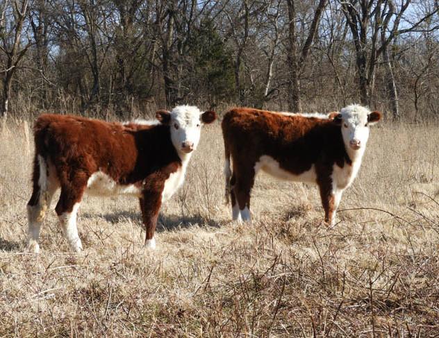 08-Farm_Auction