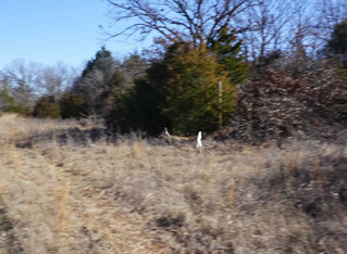 Auction: 80 Acre Recreational Property
