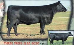 Three Trees Elba E020