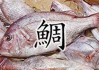 鯛.jpg