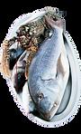 Ribarska kuca Niko Kobas