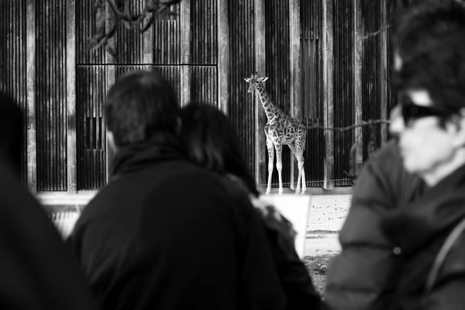 Un jour férié au zoo