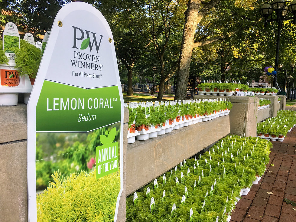 Proven Winners Lemon Coral Sedum