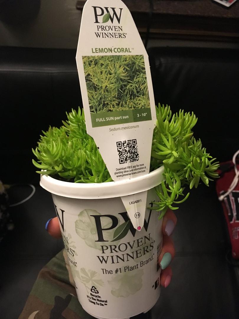 Proven Winners Penn State
