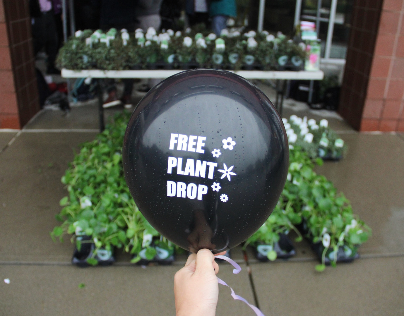 Free Plant Drop at Cornell, Emily Lube