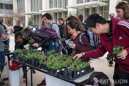 The Batt, Plant Drop at TAMU
