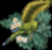 Onyx parrot