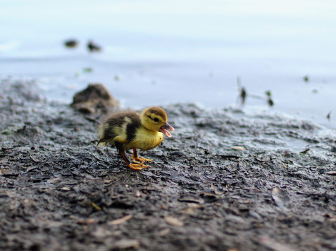 Will You Be My Ducky-Wucky?