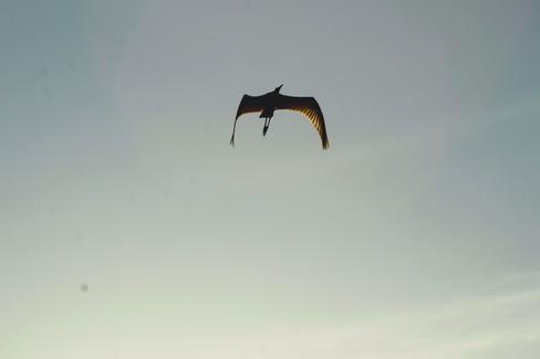 Soaring & Flying