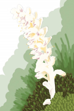 flora toothwort